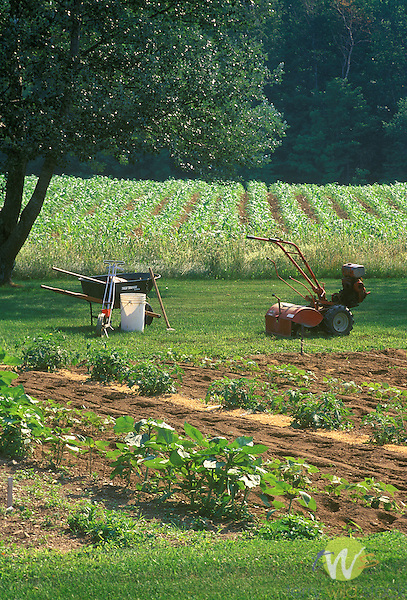 Garden in Corinna, ME, with Troy Built Rototillar, wheelbarrow, and tools. June 2003