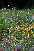 Wildflower garden meadow lawn, Schaff Garden