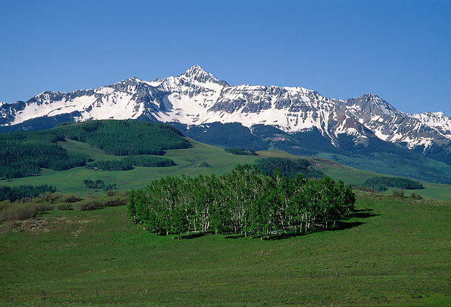 Summer aspen beneath Wilson Peak, Uncompahgre Nat'l Forest, CO