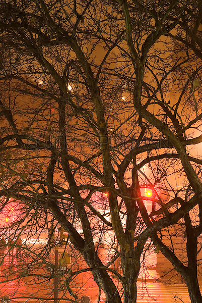 Fifth Avenue on a Rainy Evening, Viewed thru Bare Trees in Central Park....Upper East Side, New York City, New york State, USA