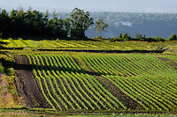Crops grow in a field on Ile D'Orleans, near Quebec City July 22, 2010.  The island is still an essentially rural place famous locally for its produce, especially strawberries, apples, potatoes and wineries.