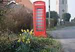 Daffodils and traditional red telephone box in small village, Great Glemham, Suffolk, England