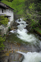 Alpine stream flowing between house and forested riverbank. Lägenfield area, ötztal, Sölden district, Tyrol, Tirol, Austria.