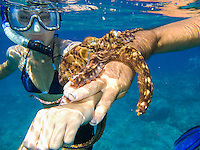 A woman with a snorkel and mask and a man hold an octopus (or he'e) in the ocean, Hawai'i.