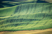 Rolling fields of grain in the Palouse.  The Palouse Is a region of Washington state where there are no continuous valleys, and the hills do not connect to make long ridges. These hills were not created by rivers and streams, as is most of our landscape, but formed more like sandunes, with winds depositing silt to form of some of the most fertile soil in the country.