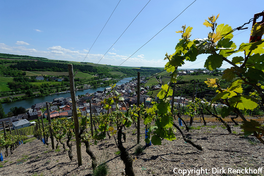 Weinbaulehrpfad in den Weinbergen beim Köppchen mit Blick auf die Mosel, Wormeldannge, Luxemburg
