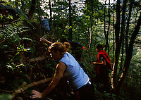A family climbs into the woods to hunt ginseng that can bring $400 a pound.  Fears are as woodlands are cut for mining, the valued plant will become more rare.