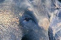 Java Elephant's Head - Bali