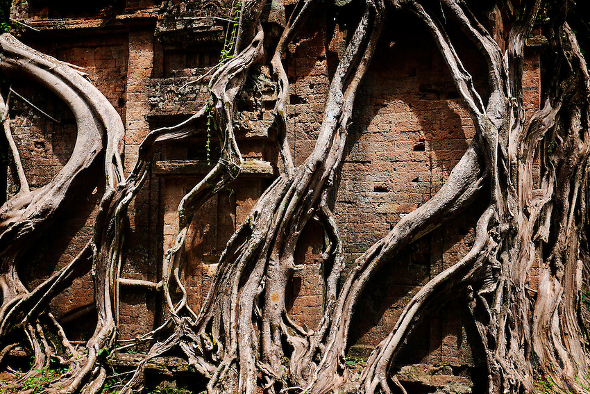 The trees and vegetation taken over the temples at the Pre-Angkorian temple complex of Sambor Prei Kuk (Khmer:  is located about 30 kilometers to the north of the town of Kampong Thom, Cambodia. It was also known as Isanapura, and was the capital of the Chenla Kingdom.<br />