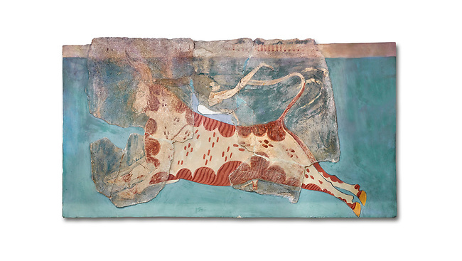 Mycenaean Fresco wall painting of a Mycanaean acrobat leaping over a bull, Early Palace,  Tiryns, Greece.  Athens Archaeological Museum. White Background.<br /> <br /> 14th  Cent BC.. Cat No 1595. The Mycenaean Fresco depicts an acrobat leaping over a charging bull whilst holding onto its horns. This ritual symbolised the struggle of domination of man over wild nature.