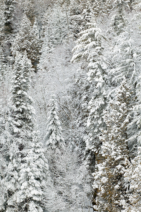 Snow covered trees in the canyon of Cascade River, Cascade River State Park, Minnesota