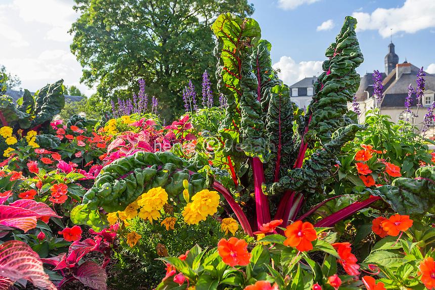 Red-stemmed chard, Beta vulgaris, in a flower bed // Bette à cardes rouges dans un massif d'annuelles. Jardins de l'Hopital de Buzançais