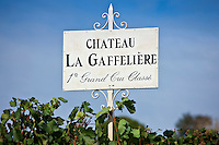 Vines at Chateau La Gaffeliere, 1er Grand Cru Classe, at St Emilion in Bordeaux wine region of France