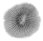 X-ray image of a mushroom coral (black on white) by Jim Wehtje, specialist in x-ray art and design images.