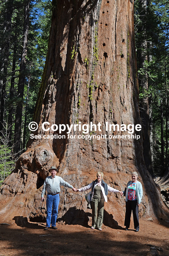 Neil Bromilow, Hazel Patterson, Estelle Bromilow, at Calaveras Big Trees State Park, California, USA, pictured in front of a giant sequoia aka as a  California redwood. 201304211651<br />