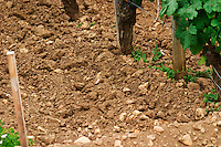 Chateau Gazin and its vineyard with a detail of the soil: clay, sand a and pebbles, gravel  Pomerol  Bordeaux Gironde Aquitaine France