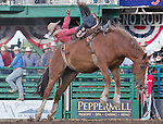 Will Lowe from Canyon, TX competes in the Bareback Bronc riding event at the Reno Rodeo on Saturday, June 20, 2015.