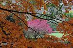 UK Westonbirt October 16