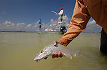 Bonefish in the Yucatan