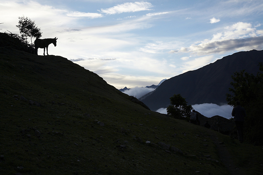Mule overlooking the valley and mountains in the small village of Yanama, Cusco, Peru.