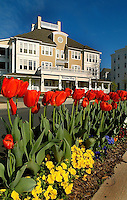 Low angle view through the tulip flowers showing Birkdale Village in Huntersville, NC. Birkdale Village combines the best of shopping, dining, apartments and entertainment venues within a 52-acre mixed-use development.
