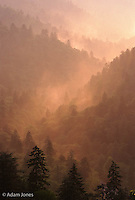 Mist rising from forest at sunset, from Morton Overlook, Great Smoky Mountains National Park, Tennessee