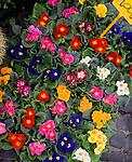 Flowers, Porto Market, Rome, Italy