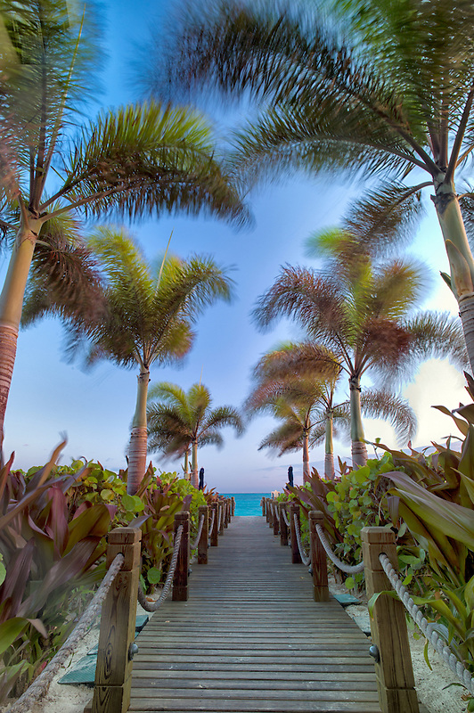 Pathway and palm trees blowing in breeze. Providenciales. Turks and Caicos.