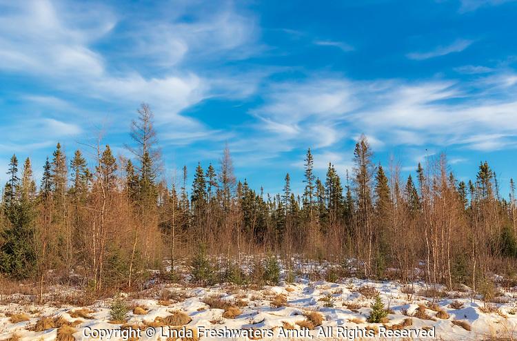 Sax-Zim Bog in northern Minnesota.
