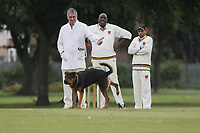 Frodo the rottweiler dog decides to interrupt play by deciding to relieve himself on the cricket stumps whilst the umpire and players look on in disbelief during Goodmayes CC vs Barking CC, Essex County League Cricket at Goodmayes Park on 13th July 2008