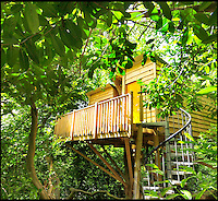 Bmth News (01202 558833)<br /> Pic QualityUnearthed/BNPS<br /> <br /> ****Must use full byline****<br /> <br /> Would be Tarzan's are rushing to book up holiday's in a unique treehouse an enterprising farmer has constructed in his Devon wood.<br /> <br /> The plush &pound;200 a night treehouse might be 30ft above the ground but would be Janes will be delighted by all the mod cons including a double bed, a kitchen, a shower and a woodburning stove.<br /> <br /> And the secluded bolthole is one of only a handful of treehouses in the country which can be rented and slept in overnight.<br /> <br /> The treehouse, near Honiton in Devon, is called the Acorn Treehouse because it is nestled within the branches of an oak tree.<br /> <br /> It is rented out through letting agency Quality Unearthed for &pound;196 a night.