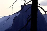 Half Dome and Dead tree at Glaciar Point in Yosemite National Park, California, USA