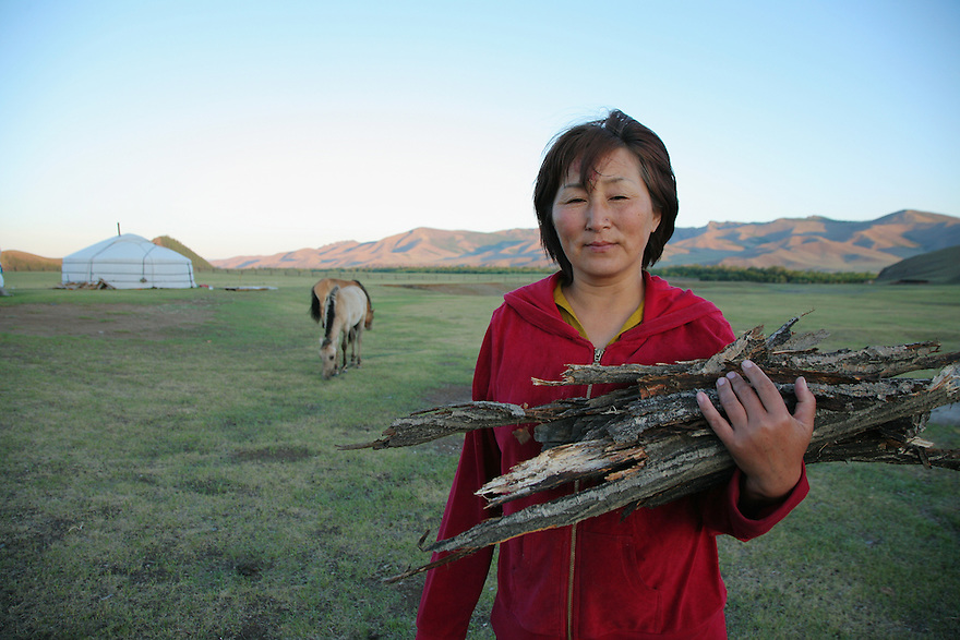 Mongolian woman collecting fire wood. Terelj National Park. Mongolia.