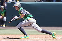 Mark Karaviotis #24 of the Oregon Ducks bunts against the UCLA Bruins at Jackie Robinson Stadium on May 18, 2014 in Los Angeles, California. Oregon defeated UCLA, 5-4. (Larry Goren/Four Seam Images)
