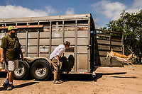 April Molitor, watches wih her father Jason Molitor, CEO of OX Ranch,  as Impala's are released into the wild at the Ox Ranch on 17th of August, 2017 in Uvalde, Texas, USA. <br /> Photo Daniel Berehulak for the New York Times<br /> As part of the Ox Ranch's breeding program, new animals bred from another ranch to introduce new blood lines to their herd to ensure a healthy herd. Impala are an excellent exotic species to hunt year round, according to the Ox Ranch website.<br /> Origin: Africa<br /> Horn Size: 20-36 inches<br /> Weight: 100-135 pounds<br /> Estimated World Population: 1,500,000<br /> The Impala is one of Africa's most common antelopes, and now you can hunt it right here in Texas! Impalas are able to run over 37 mph and jump as far as 33 feet in distance.<br /> <br /> You may hunt our trophy Impala using any method you prefer, including Spot and Stalk, Bow Hunting, Rifle Hunting, Pistol Hunting, Safari Style, or from a Blind. Our Impala Antelope are free ranging on over 18,000 acres of Texas Hill Country!<br /> <br /> Impala Hunting Trophy Fee: $5,750<br /> <br /> *Field Dressing Included<br /> *100% Opportunity Guarantee<br /> *Transportation of your Animal to Meat Processor / Taxidermist<br /> *Firearm and Ammunition Provided, if Needed<br /> *Access to the Ranch's 5,800-foot Paved and Lighted Runway