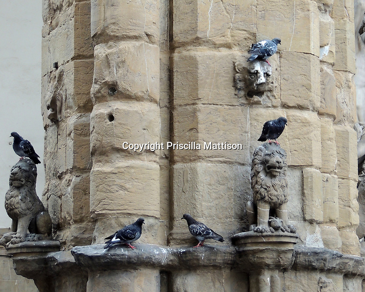 Florence, Italy - October 3, 2012: Pigeons congregate on a pilaster of the Loggia dei Lanzi.