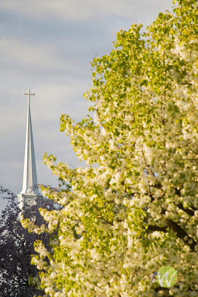 Faxon Kenmore United Methodist Church Spire with flowering pear blossom tree. Loyalsock, PA.