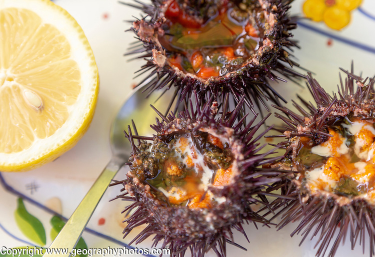 Sea Urchin, Paracentrotus lividus, prepared for eating with half a lemon on a plate, Atlantic Coast, Rogil, Algarve, Portugal, southern Europe