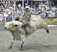 "29 August, 2004: PRCA Rodeo Bull Rider Myron Duarte ranked 5th in the world riding the bull ""Close Call""  during the PRCA 2004 Extreme Bulls competition in Bremerton, WA. Myron won the overall competition with a combined score of 176."