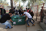 """Palestinian workers move a lion in a crate at a zoo in Rafah in the southern Gaza Strip, during the evacuation by members of the international animal welfare charity """"Four Paws"""" of animals from the Palestinian enclave to relocate to sanctuaries in Jordan, on April 7, 2019. Forty animals including five lions are to be rescued from squalid conditions in the Gaza Strip, an animal welfare group said. Photo by Ashraf Amra"""