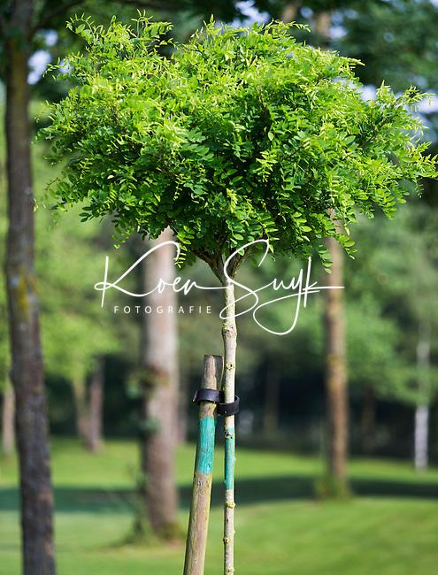 OUDENAARDE (BELGIE) -  150 meter paaltje, markering, dmv acasia. Golfclub Oudenaarde met 36 holes, de Kasteelbaan en de Ankerbaan). COPYRIGHT KOEN SUYK