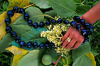 Kukui nut lei with leaves, fruit and blossoms