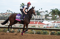 DEL MAR, CA - NOVEMBER 02: Happily, owned by Derrick Smith , Mrs. John Magnier & Michael Tabor and trained by Aidan P. O'Brien, exercises in preparation for Breeders' Cup Juvenile Fillies Turf at Del Mar Thoroughbred Club on November 2, 2017 in Del Mar, California. (Photo by Jamey Price/Eclipse Sportswire/Breeders Cup)