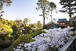 The Japanese Tea Garden in Golden Gate Park in San Francisco, CA, USA