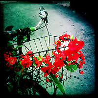 Bicycle with red flowers