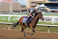 DEL MAR, CA - NOVEMBER 02: James Garfield, owned by W.J. Gredley & T C O Gredley and trained by George Scott, exercises in preparation for Breeders' Cup Juvenile Turf at Del Mar Thoroughbred Club on November 2, 2017 in Del Mar, California. (Photo by Jamey Price/Eclipse Sportswire/Breeders Cup)