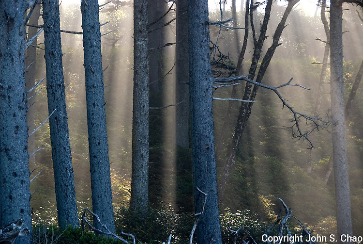 Vertically-angled rays of sunlight project in mist between forest trees, suggestive of their spirits. Ruby Beach, Olympic National Park, Washington State.....Photographed on digital media.