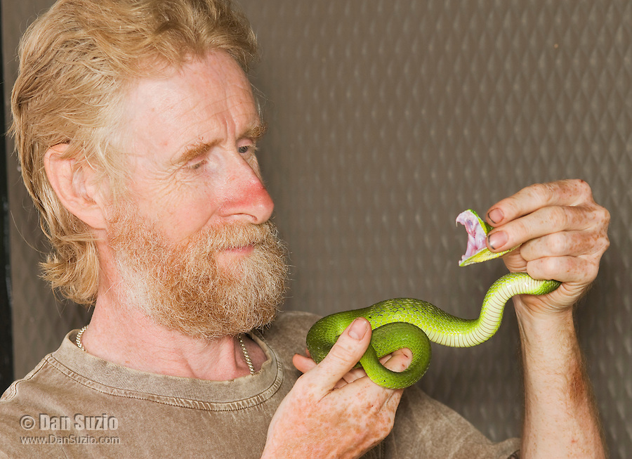 British herpetologist Mark O'Shea shows the fangs of a Sunda Island pitviper, Cryptelytrops insularis, at Bakhita Mission, near Eraulo, Ermera District, Timor-Leste (East Timor)