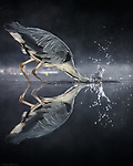 Heron is reflected in the water by Ali Abdulraheem