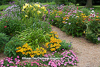 63821-21914 Path through flower garden, Tiger Eye  Black-eyed Susans (Rudbeckia hirta), Pink Verbena (Verbena canadensis), Yellow Daylily (Hemerocallis) Pink Monarda, Purple Coneflowers (Echinacea purpurea)  Marion Co., IL